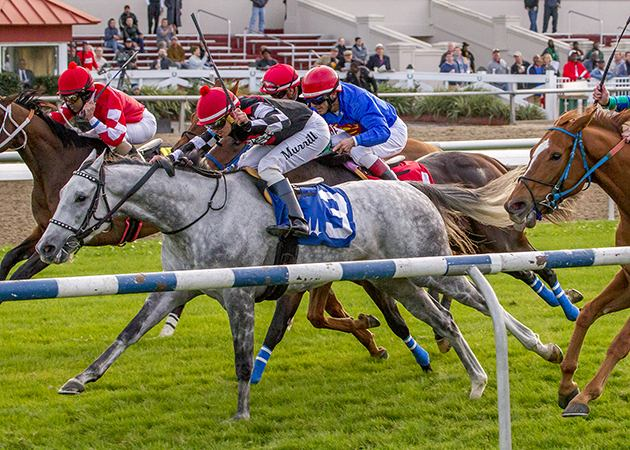 Dare To Dream Stable Horse Racing Partnership's Jockamo's Song wins at Fair Grounds on 12-30-16