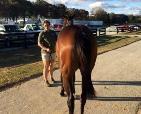 The Weef - 2 year old filly partnership rear view