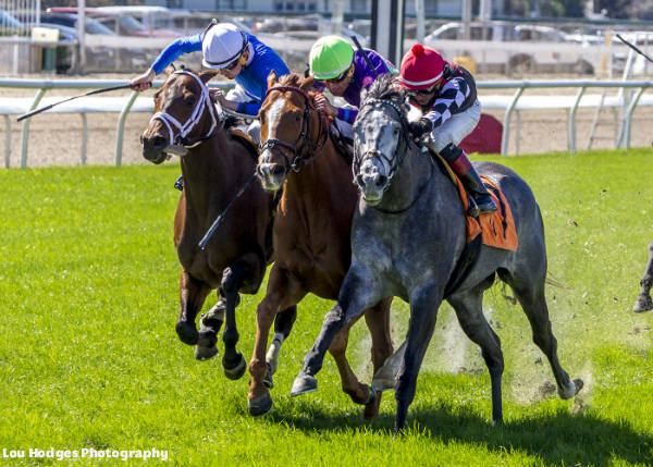 Tiznoble wins at Fair Grounds Racecourse on 02/25/17 in race 3