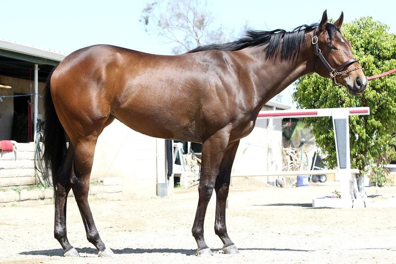 Spiced Perfection - 2 year-old filly partnership right side