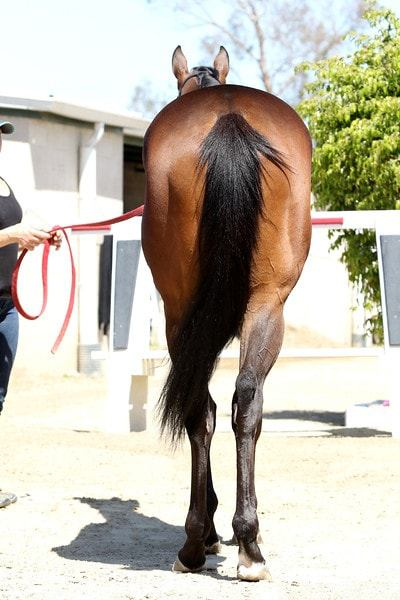 Spiced Perfection - 2 year-old filly partnership rear