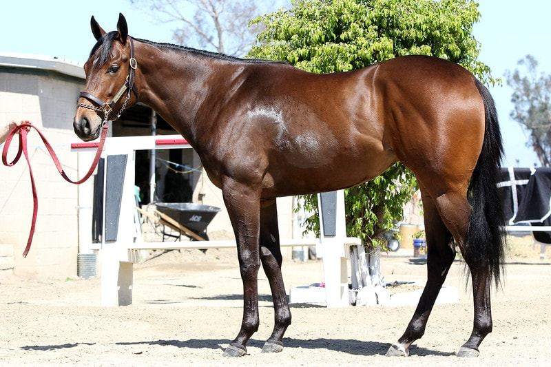 Spiced Perfection - 2 year-old filly partnership left side 2