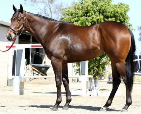Spiced Perfection - 2 year-old filly partnership left side