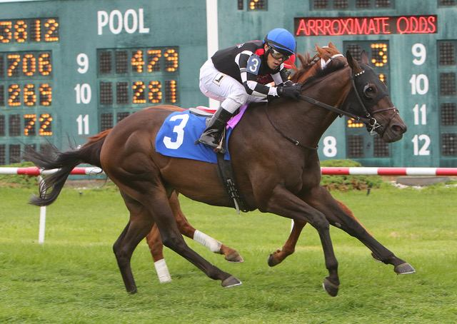 Golden Story wins at Suffolk Downs on 08/05/17 in race #7.