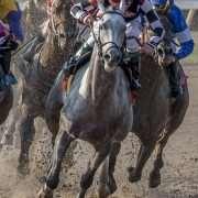 Horse Racing Partnership - Jockamo's Song wins the Louisiana Sprint Cup Stakes at Louisiana Downs on 08/05/17