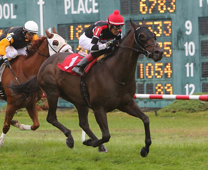 Dare To Dream Stable Horse Racing Partnerships Golden Story wins at Suffolk Downs