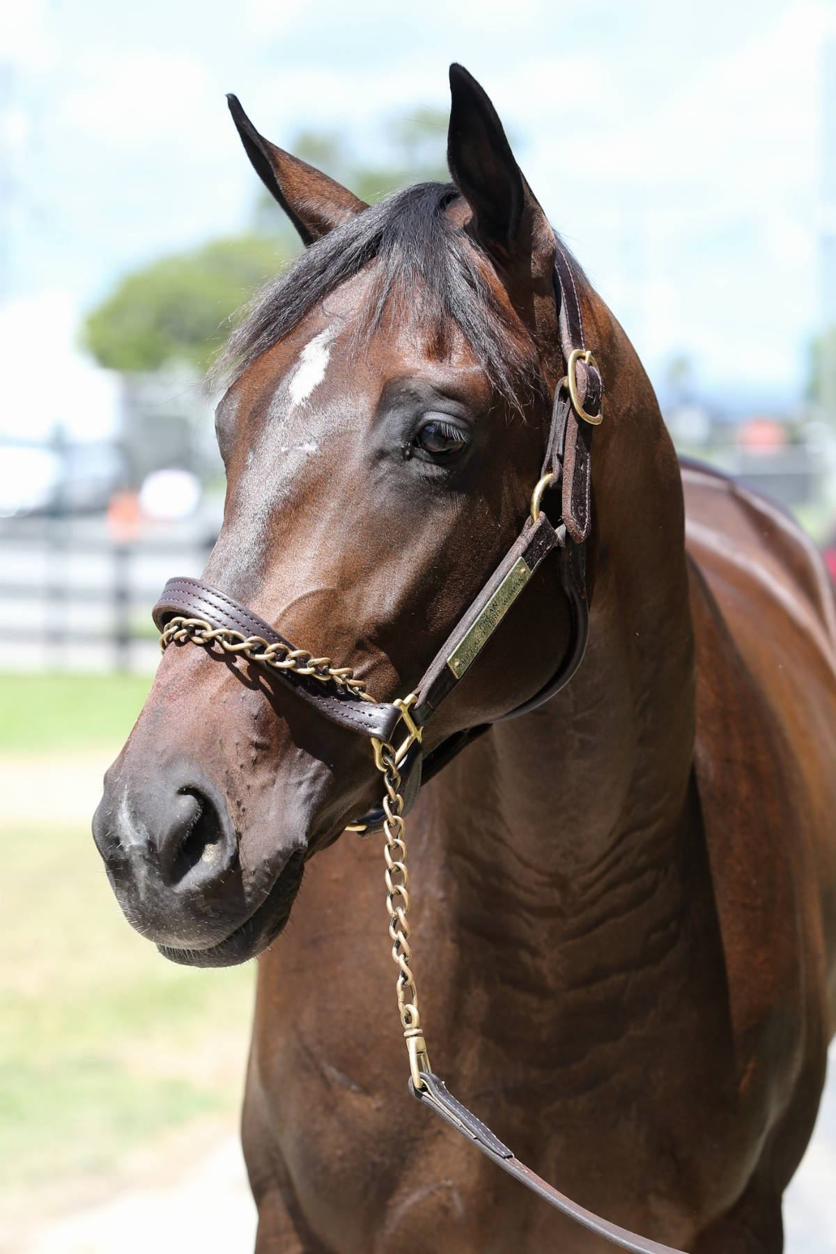 Wings of Fury - 2 year old filly- horse racing partnership head 2
