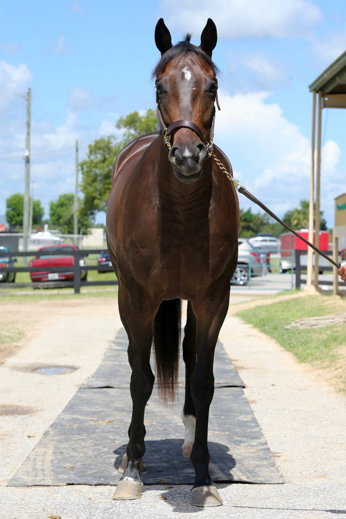 Wings of Fury - 2 year old filly- horse racing partnership front