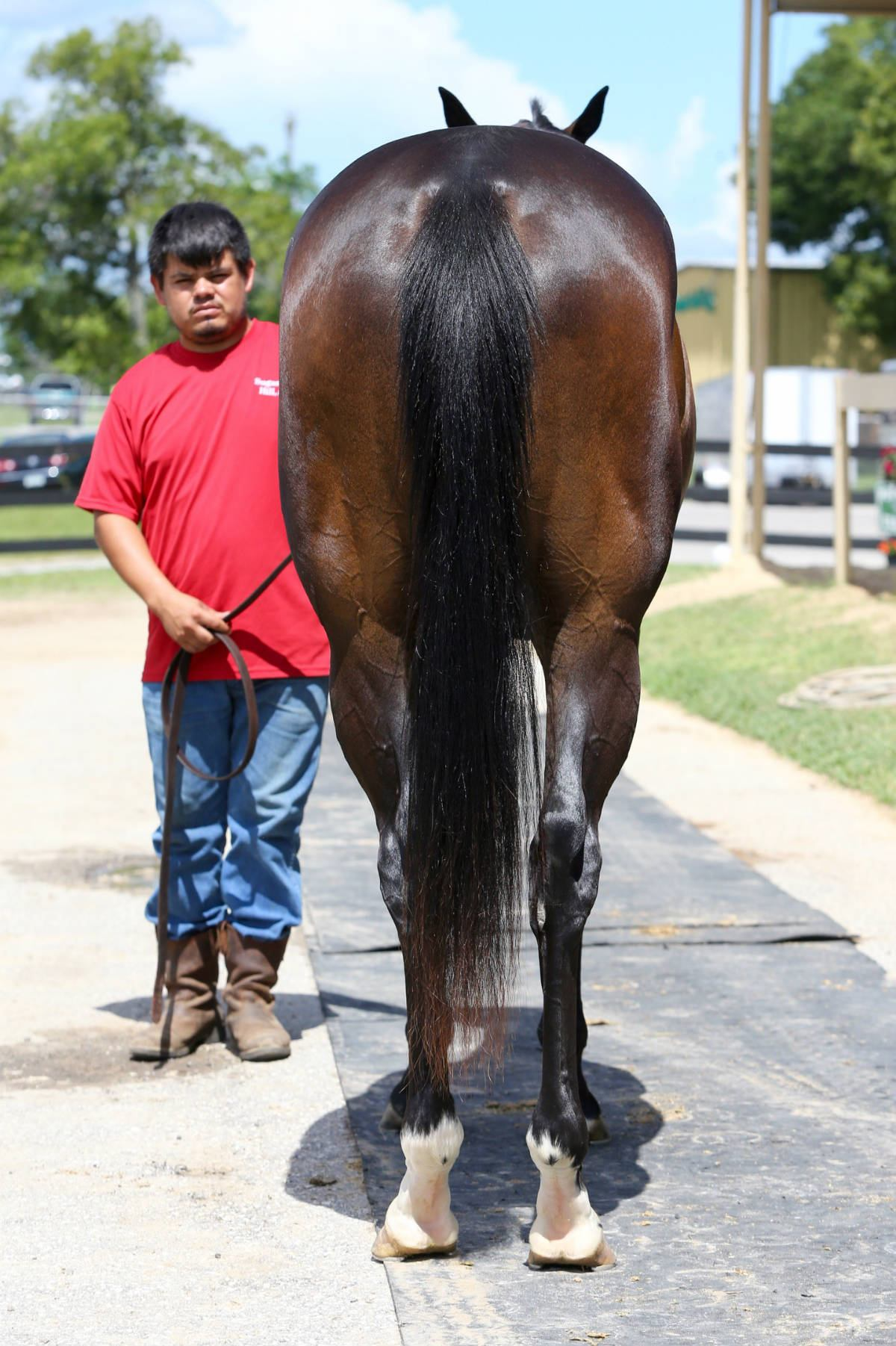 Wings of Fury - 2 year old filly- horse racing partnership rear