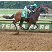Dare To Dream Stable's He's No Bull wins at Belterra Park by almost 10 lengths on August 18, 2018 in race 3.