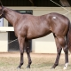 R Lukki Song - 2 year-old KY Bred filly offered by Dare To Dream Stable Horse Racing Partnerships (left side view)