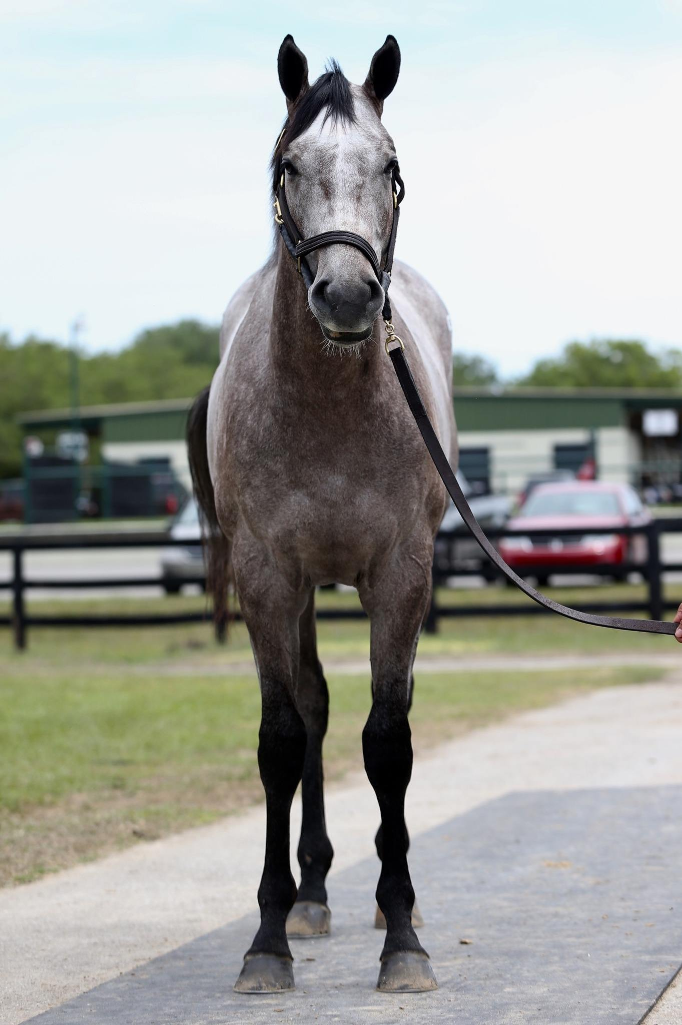 Embolden - 2 year-old VA Bred colt offered by Dare To Dream Stable Horse Racing Partnerships (front view)