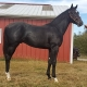 Prince of Mayhem - two year old colt by Violence out of Paisley Park (Notebook) - right side pre-winter.