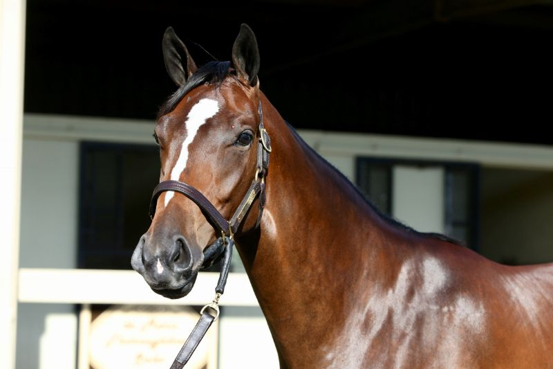 Arrest Warrant - two year old filly by Into Mischief out of Party of Interest (Bernardini) - left head
