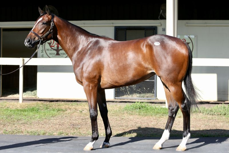 Arrest Warrant - two year old filly by Into Mischief out of Party of Interest (Bernardini) - left side 2.