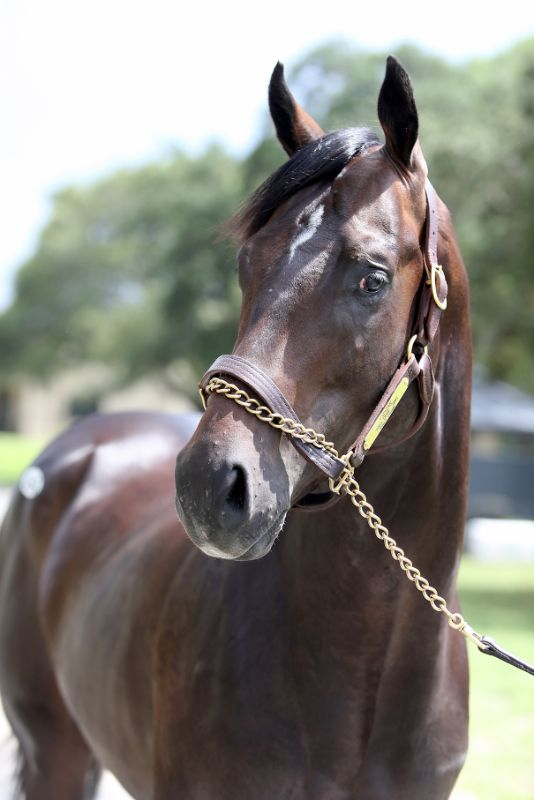 QUICK TEMPO - two year old colt by Tapizar out of Sing Dixie Sing (Dixie Union) - left head and right body
