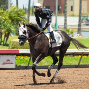 Desert Swarm wins at Los Alamitos Race Course on 07/03/20 in race #1.