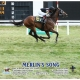 Merlin's Song wins at Arlington Park on 08/7/20 in race #5