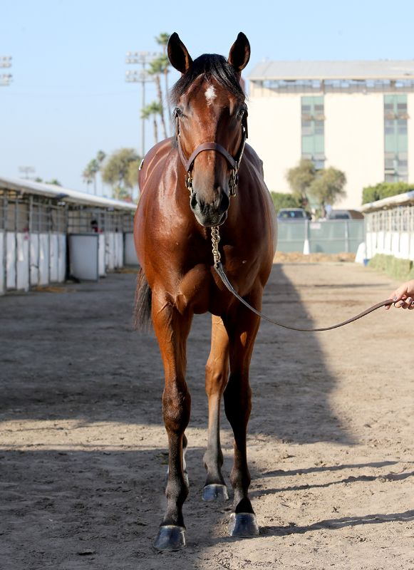 SYNNIN AND WINNIN - 2019 colt by Mr. Big out of Sassy Synner (Synastry) - front
