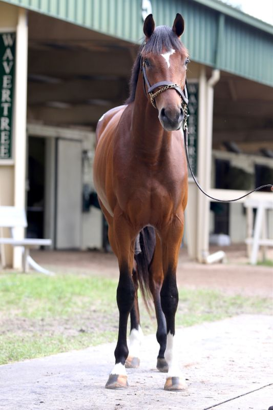 SOLAR TAP - 2019 Bay colt by Tapizar out of Suncadia (Tiznow) - front