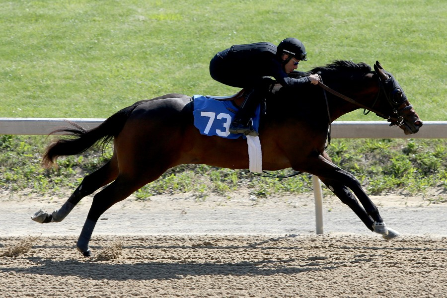 SOVEREIGN OF SPEED - 2019 Bay colt by Lord Nelson out of New Key (Majesticperfection) - action