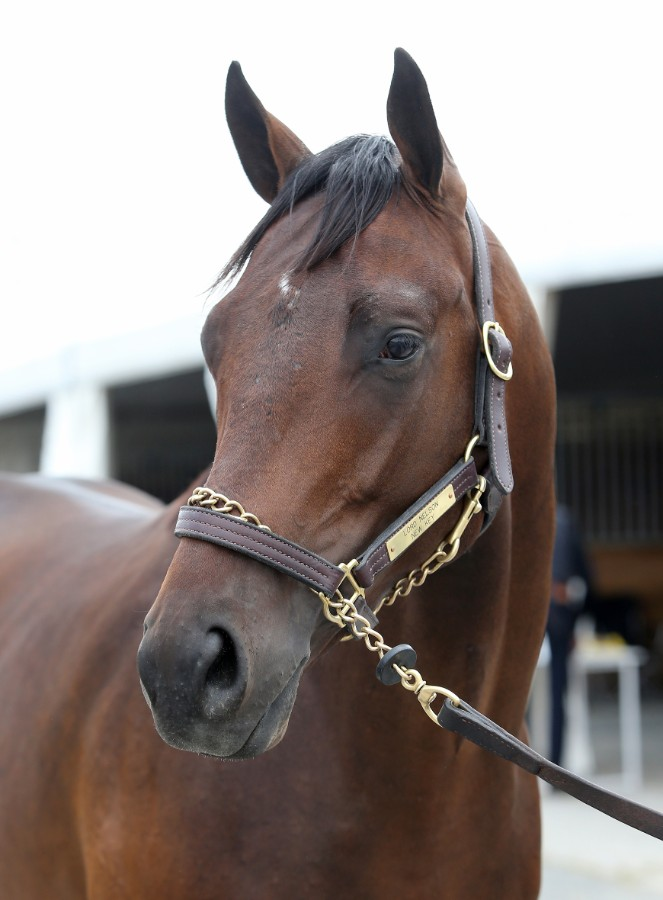 SOVEREIGN OF SPEED - 2019 Bay colt by Lord Nelson out of New Key (Majesticperfection) - head 1