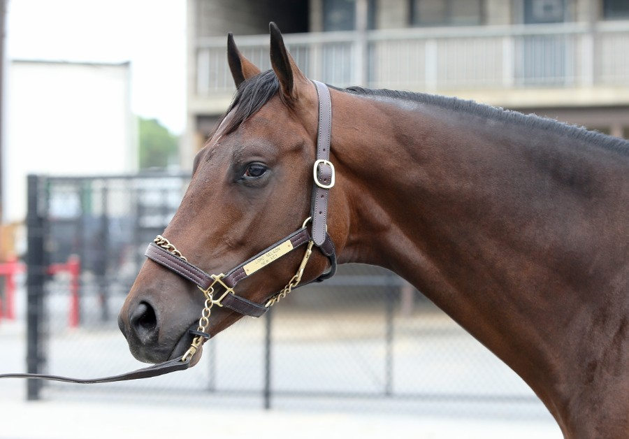 SOVEREIGN OF SPEED - 2019 Bay colt by Lord Nelson out of New Key (Majesticperfection) - head 3