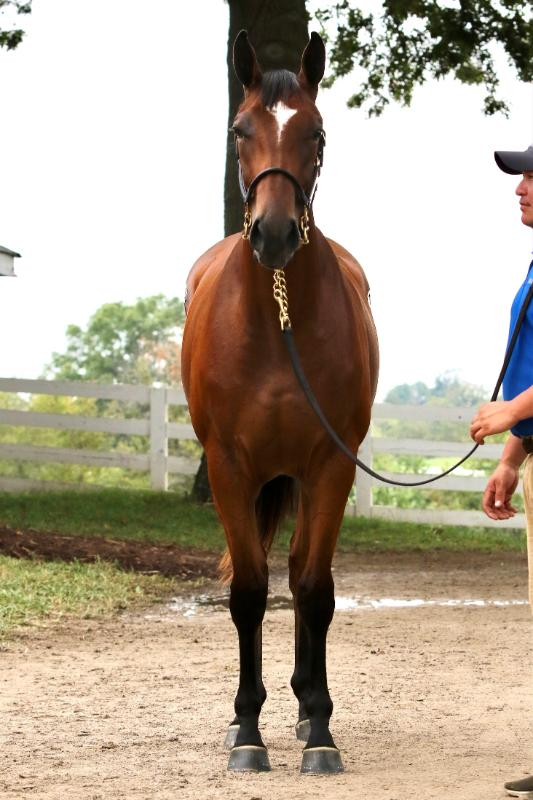LEAD PERFORMER - 2020 Bay filly by Pioneer of the Nile out of Marquee Cal Gal (Cowboy Cal) - front.